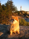 Proud_dog_atkinson_lighthouse_bc_3